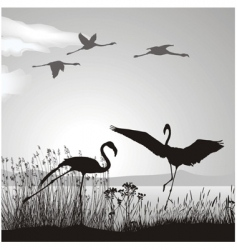flamingo silhouettes vector image