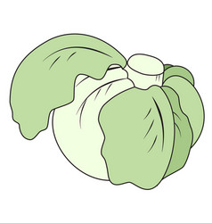 head of cabbage vector image