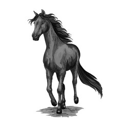 Horse running sketch of galloping black stallion vector