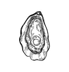 oyster ink sketch vector image