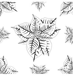 red poinsettia on white background vector image