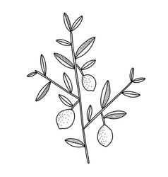 tiny lemon tree branch with lemons black outline vector image