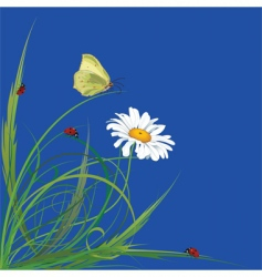 ladybirds vector image vector image