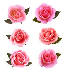 Set of beautiful pink roses vector image