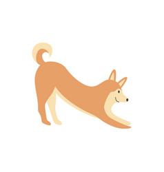 a cute brown shiba inu dog smiles and stretches vector image