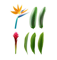 Bird paradise and red ginger vector