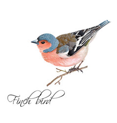 Finch bird vector