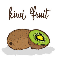 kiwi fruit vector image