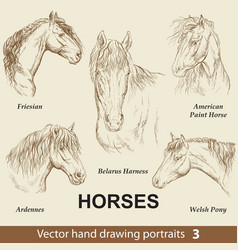 Set hand drawing horses 3 vector