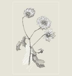 Vintage botanical flower flower vector