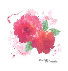Watercolor peony flower vector