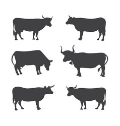 set of different cows isolated vector image
