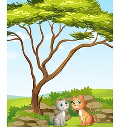 Two cats in the forest vector image vector image