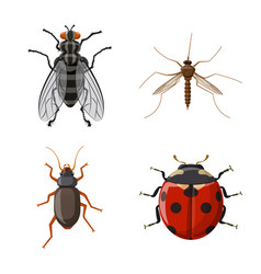 design of insect and fly icon collection vector image