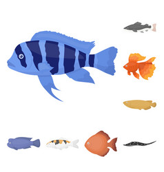 Different types of fish cartoon icons in set vector