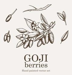goji berry vector image