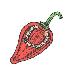 hand drawn of red cut pepper sketch style doodle vector image