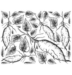 hand drawn of sweet potato on white background vector image