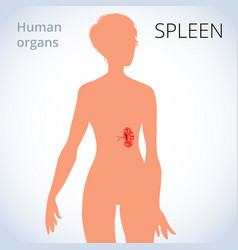 location of the spleen in the female body the vector image