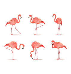 Red and pink flamingo set vector