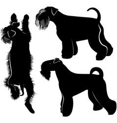 miniature schnauzer vector image vector image