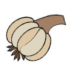 garlic vegetable natural vector image