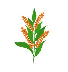 Quinoa set seeds healthy quinoa vegetarian food vector