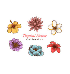 tropical flowers in sketch vector image
