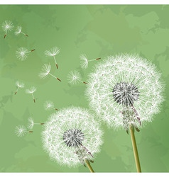 Vintage floral background with dandelion vector