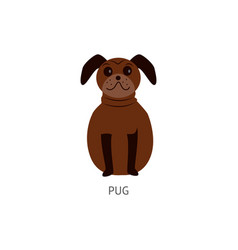 brown pug sitting isolated on white background vector image