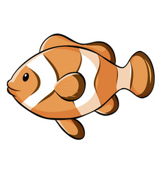Clownfish on white background vector