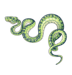 Hand drawn green spotted snake vector