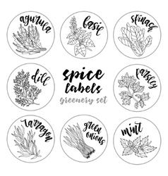 Spices herbs labels Contour greenery set vector