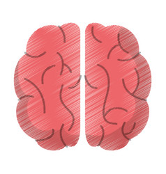 Drawing brain human idea intelligence vector