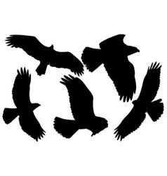 Birds prey silhouette vector