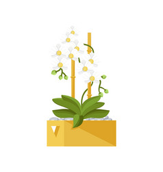 Flower in pot isolated icon vector