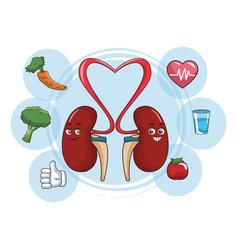 Kidneys funny cartoon vector
