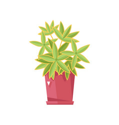 Beautiful flower in pot isolated icon vector