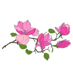 branch with magnolia flowers vector image