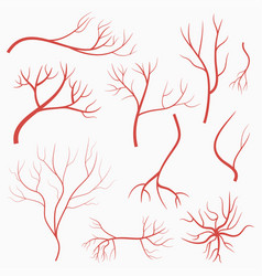 eye veins and arteries set of red blood vessels vector image