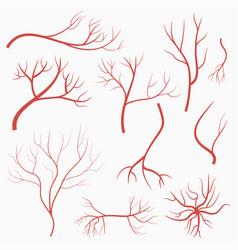 Eye veins and arteries set of red blood vessels vector