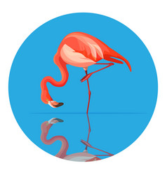 Pink flamingo animal tall wading bird vector