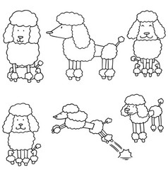 Set of poodle vector