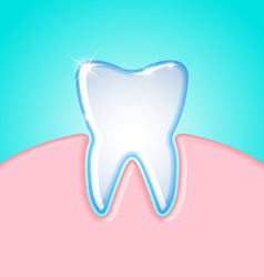Tooth in gum vector