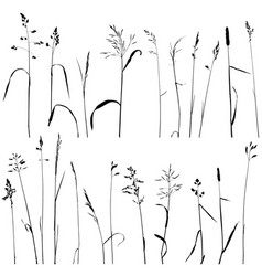 wild cereal plants vector image