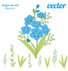 Bouquet beautiful flowers forget-me-not vector