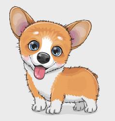 Cute cartoon dog corgi vector