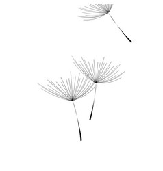 Flying dandelion dandelion fluff on blank vector