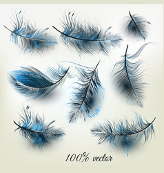 Set realistic blue feathers vector