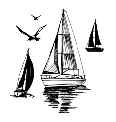 sea yachts flying seagulls vector image vector image